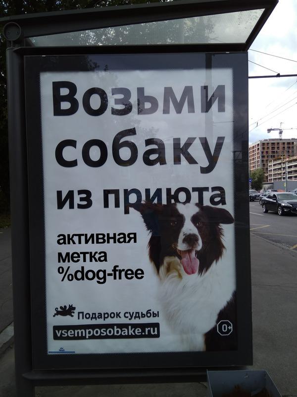 http://img.zzweb.ru/img/1013497/dog-free.jpg