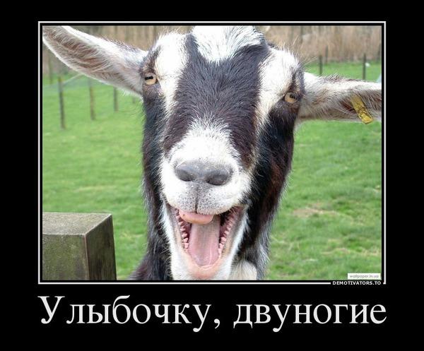 http://img.zzweb.ru/img/723588/ulyibochku-dvunogie.jpg