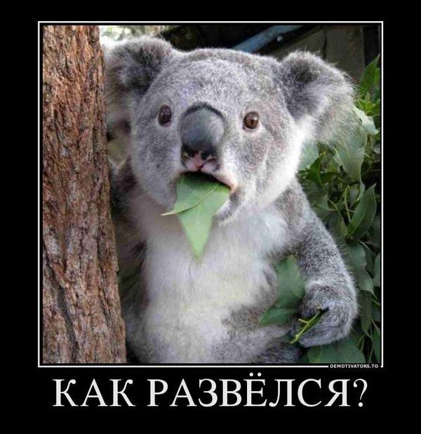http://img.zzweb.ru/img/747308/razvelsia.jpg