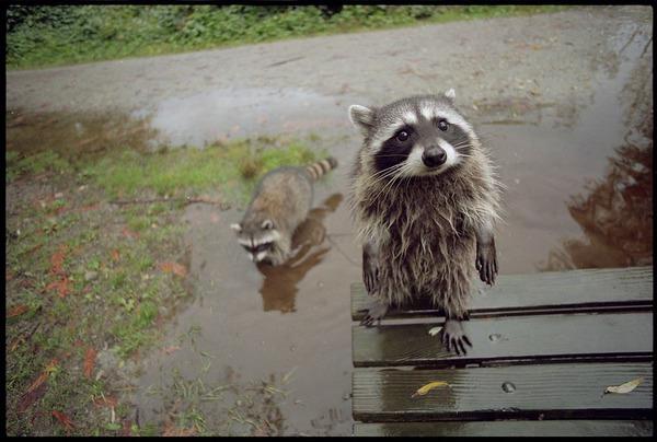 http://img.zzweb.ru/img/752924/animals.jpg