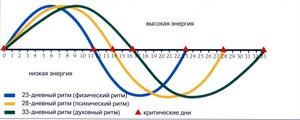 https://img.zzweb.ru/img/755556/biorhythms.jpg