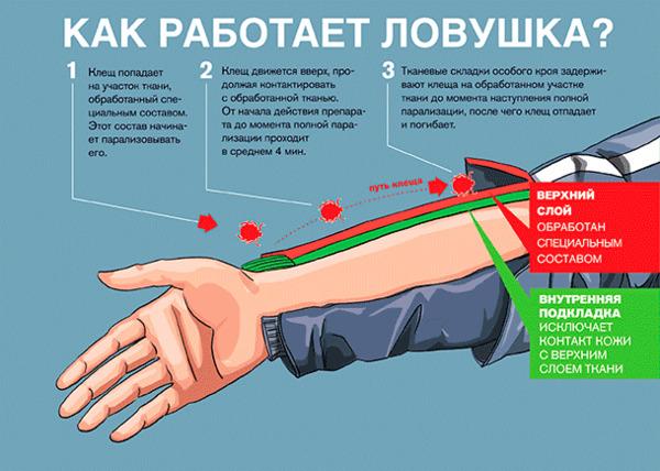 https://img.zzweb.ru/img/818471/schema.png