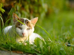 http://img.zzweb.ru/img/826255/the-cat.jpg