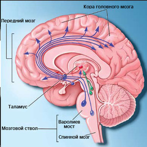 http://img.zzweb.ru/img/836122/mozg.jpg