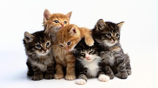http://img.zzweb.ru/img/888587/cats.jpg