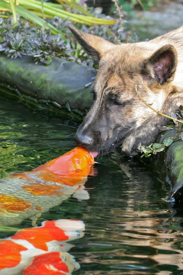 http://img.zzweb.ru/img/892085/dog-and-fish.jpg